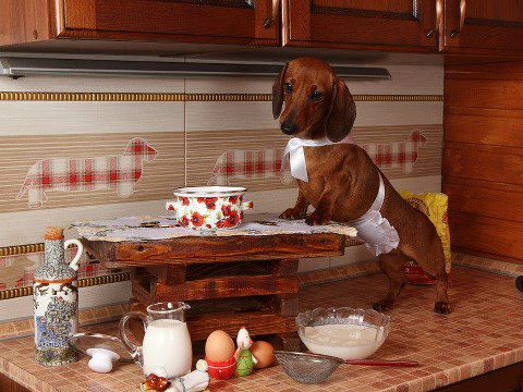 A Wiener Dog in the Kitchen